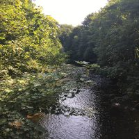 Trees by the river Rumney